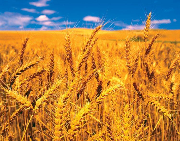 Pakistan Imports Wheat From Ukraine