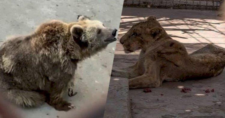 Animal Cruelty In Karachi Zoo