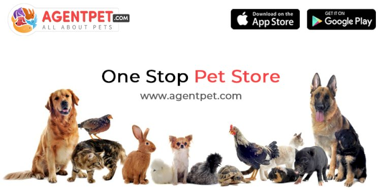 Agent Pet A Heaven For Pet Lovers