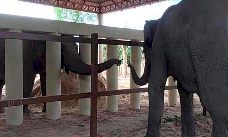 Kaavan makes a new friend in Cambodia