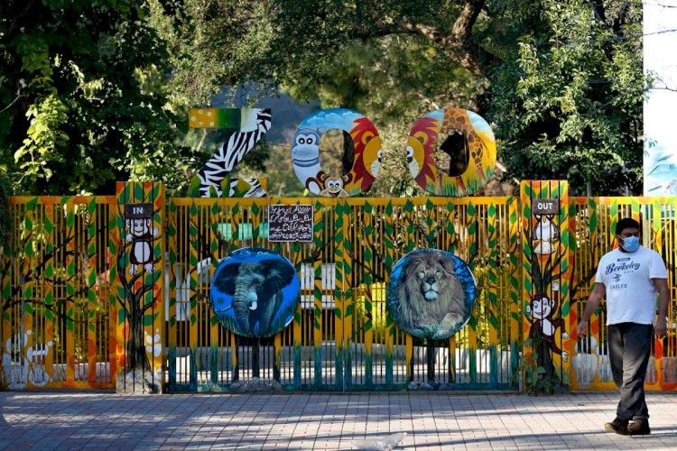World's Worst Zoo In Islamabad Finally Shuts Down