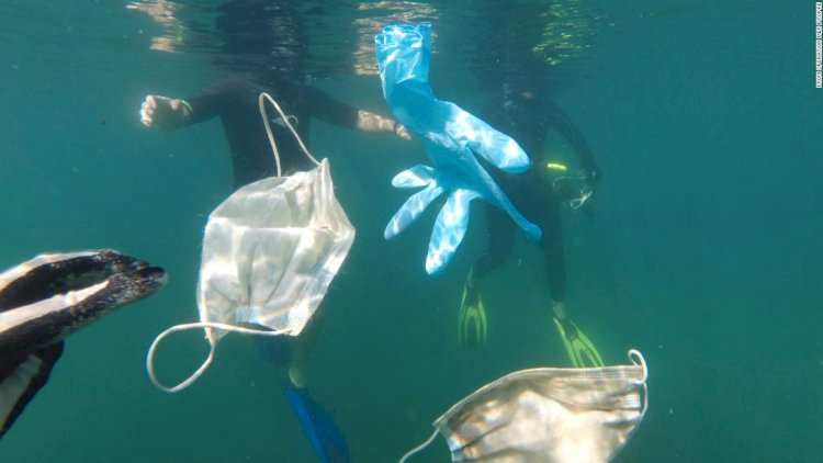 Face Masks & Plastic Gloves Are Polluting The Oceans