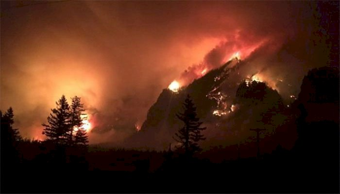 Dera Ismail Khan And Haripur Wildfire Destroyed Acres Of Forest