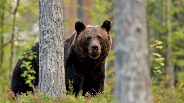 Two Bears Rescued In Bahawalpur, Captor Arrested
