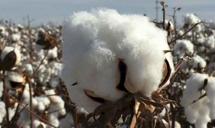 Pakistan Cotton Import, going to land route now