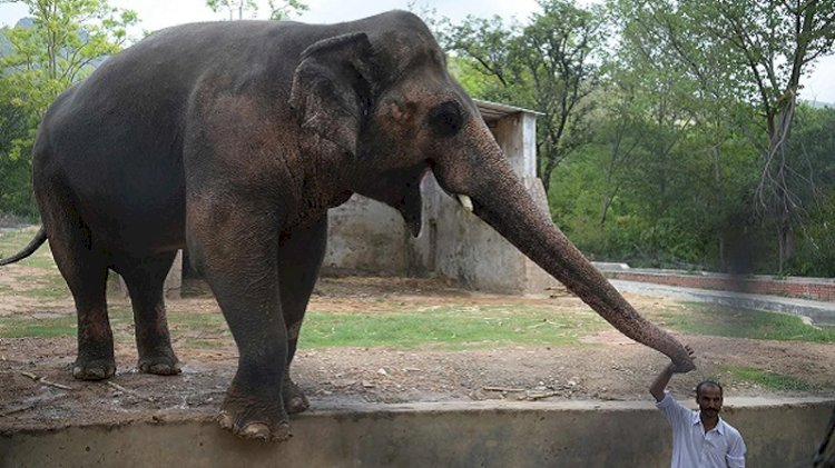 Peshawar Zoo takes on federal govt over importing elephants from Zimbabwe