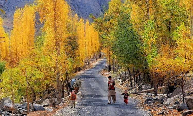 FC Stopped Unlawful Deforestation In Gilgit-Baltistan