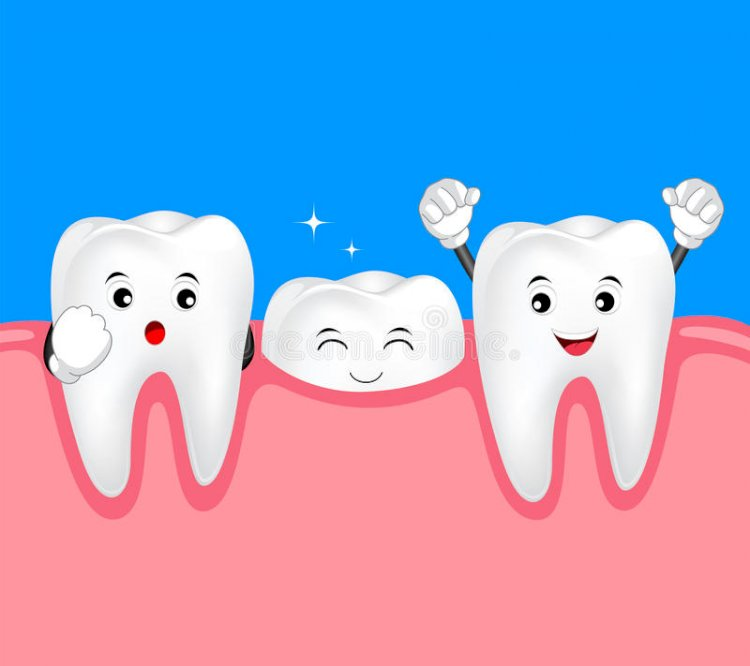 The Antibody Could Be Used In Tooth Regeneration Therapy