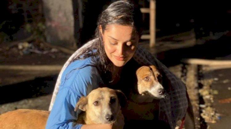 Ayesha Chundrigar is vaccinating Karachi's dogs but needs help