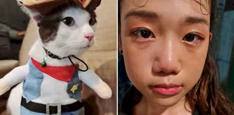 The Snake Swallows  Little Girl's Cat In Thailand