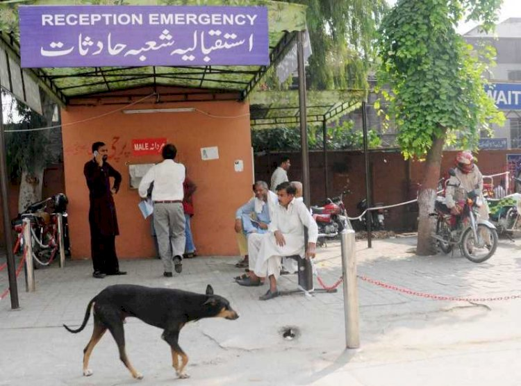 5,000 dog bite cases reported this year: Sindh