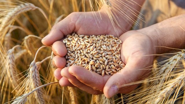 Pakistan will run out of wheat stock within 3 weeks: Reports.