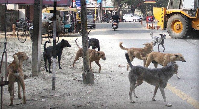 'Govt officers should be charged Rs50,000 for dog bite cases': SHC