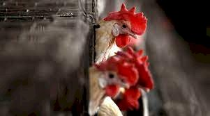 World's First Human Case Of Bird Flu Strain 'H10N3' Confirmed By China