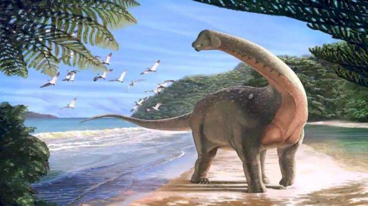 'Enormous' Dinosaur Species Discovered in Australia