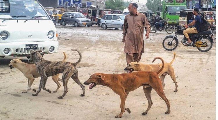 Astray Dog Bites 17 Children In Jamshoro, Sindh