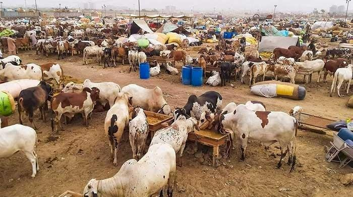Eidul Azha SOPs: Animal Sellers Should Be Vaccinated Against COVID-19