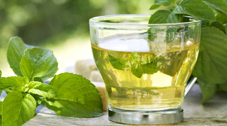 Drinking Green Tea May Help To Prevent Alzheimer's Disease.
