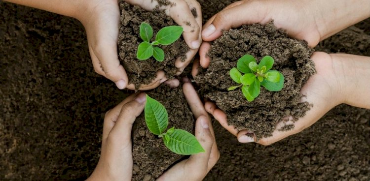 Pakistan Sets A World Record By Planting 52,000 Saplings in 1 Minute.