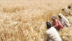Government approved the import of 550,000 tons of wheat.